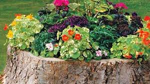 charming tree stump flower box so clever and exquisitely