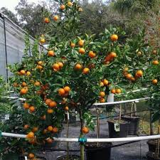 forest hills landscaping and tree farm kissimmee orlando and