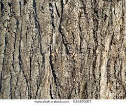 wood bark tree texture background stock photo 626970077