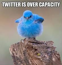 Meme Bird - twitter bird meme can t handle anymore bandwidth