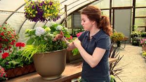 Galvanized Containers For Gardening Hydrangea Combinations For Your Container Gardens With Katie
