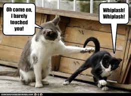 Lawyer Cat Meme - never play tag with a personal injury lawyer s cat lolcats lol