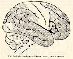 Cortical Blindness May Result From The Destruction Of Classics In The History Of Psychology James 1890 Chapter 2