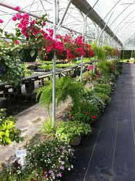 About Rock Garden by Me Best Ideas About Rock Pike Cumming Ga Pike Nursery Plants Near