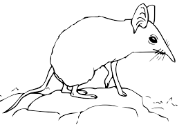 shrew coloring pages getcoloringpages com