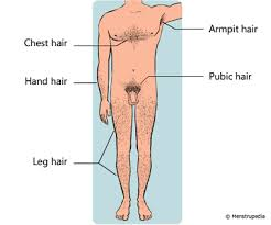 boy pubic hair styles friendly guide to healthy periods menstrupedia