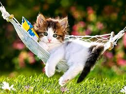 wide hdq kittens and wallpapers kittens and