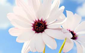 Flower Wallpaper Flower Wallpaper Hd Early Flower