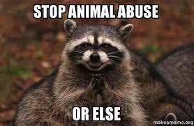 Abuse Memes - stop animal abuse or else evil plotting raccoon make a meme