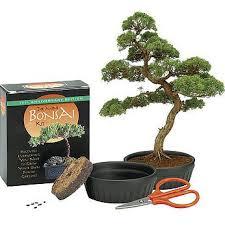 the mini bonsai kit 9780762409747 item barnes noble