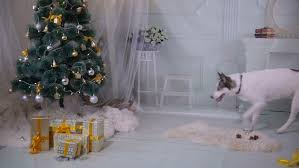 Dogs Decorating Christmas Tree Video by Christmas Background Room Decorated For New Year Christmas