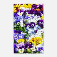 Purple Outdoor Rug Purple Yellow Pansy Rugs Purple Yellow Pansy Area Rugs Indoor