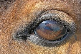 Goat Eye Anatomy The Functions Of Different Pupil Shapes U2013 Koryos Writes