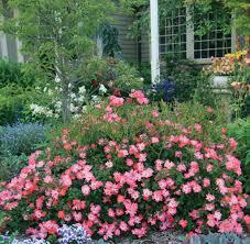 perennial garden vegetables pinkdriftrose mary mary quite contrary pinterest drift