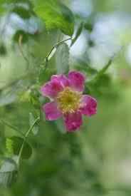 washington native plants paradise valley conservation area u2013 trip report