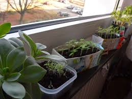 gem se pflanzen balkon fräuleins wunderbare welt der frühling kommt das gemüse wächst