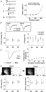functional elimination of excitatory feedforward inputs underlies