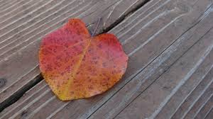 free images tree nature plant wood fall flower petal red