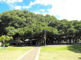 banyan tree park lahaina hi top tips before you go with