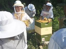uvm beekeepers create a u0027bee campus u0027uvm food feed