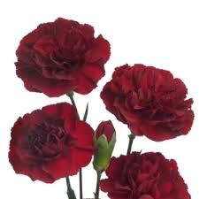 burgundy flowers mini carnation flowers