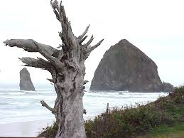 cannon beach net news events weather calendar