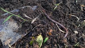 attract earthworms to your yard welcome wildlife