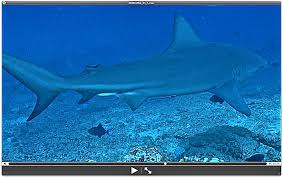 the best shark dive in the world august 2013