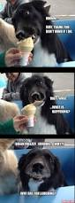 top 25 best pictures of dogs ideas on pinterest funny pictures