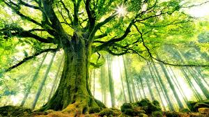 cool trees ancient tree cool wallpapers