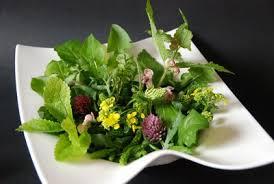 la cuisine des plantes sauvages salade de plantes sauvages cuisine plurielle