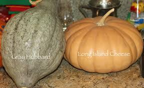 Tolay Pumpkin Patch Petaluma by Patch Long Island 2013 Nba