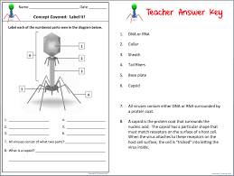 amy brown science interactive notebooks make teaching viruses and