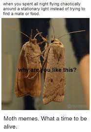 Moth Meme - when you spent all night flying chaotically around a stationary