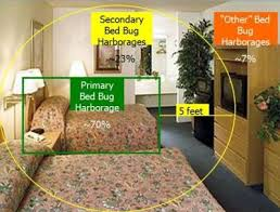 Treatment For Bed Bugs Egypt Bed Bugs Treatment