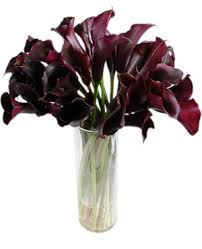 black calla eggplant calla lillies color burgundy maroon