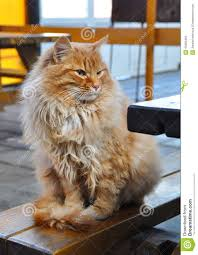 red cat sitting on the bench stock photo image 43480463