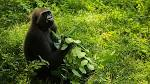 Image result for related:https://news.mongabay.com/2016/06/how-is-indonesian-president-jokowi-doing-on-environmental-issues/ jokowi