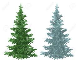 green and blue christmas spruce fir trees isolated on white