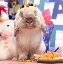 rabbit birthday bunny birthday cutest paw