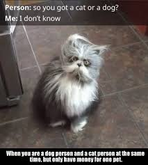 Crazy Cat Meme - what breed of cat is this i need 10 of them loldamn com
