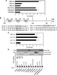 1100 The Flag Transforming Growth Factor β U2013mediated Tumor Necrosis Factor