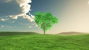 tree in middle of a meadow photo free