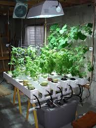 Grow Lights For Indoor Herb Garden - 15 best indoor gardening images on pinterest indoor gardening