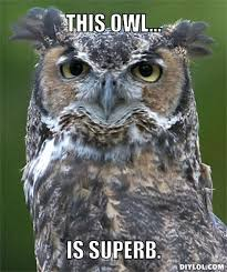 Superb Owl Meme - superb owl meme generator this owl is superb 2b10d0 flickr