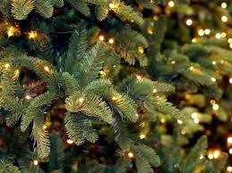 18 places to buy your christmas tree in gloucestershire