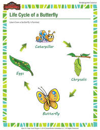 life cycle of a butterfly free science printables of