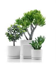 pots for indoor plants best plant for indoor flower pots modern