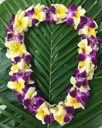 purple orchids plumeria with purple orchid the hawaiian company