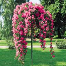 Trees Plants And Flowers - 15 diy ideas for your garden decoration 15 rose trees rose and